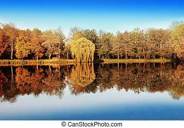 lago, e, floresta, em, outono