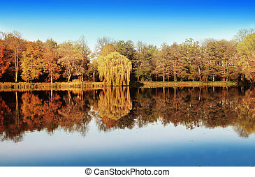 lago, e, foresta, in, autunno