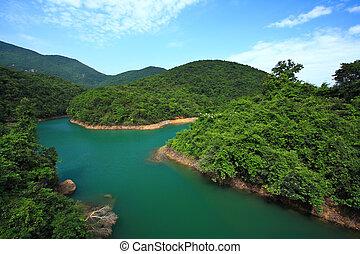 lago, em, floresta