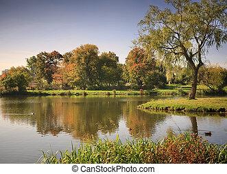 lago, en, el, otoñal, parque