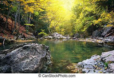 lago, en, otoño, forest.
