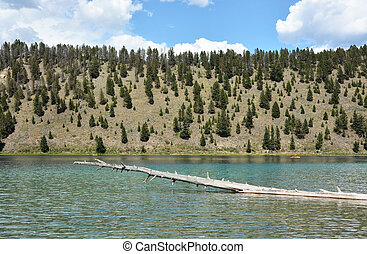 lago, in, yellowstone parco nazionale