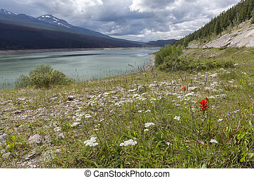 lago montagna, e, wildflowers, -, jasper parco nazionale, canada