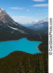 lago montanha, em, a, floresta