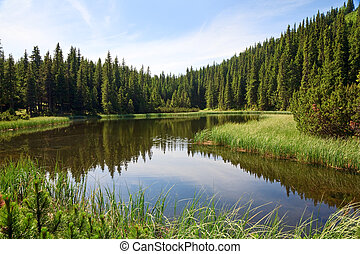 lago, montanha, floresta, verão