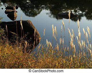 lago, paisagem, outono