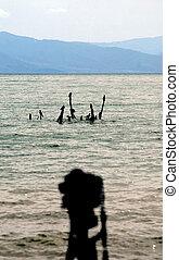 lago, prespa, macedonia