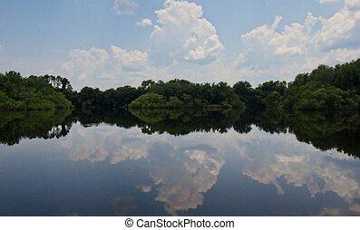 Plantas y el cielo azul se reflejan en un lago