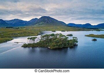 lago, vista aérea, árboles de pino, isla, derryclare