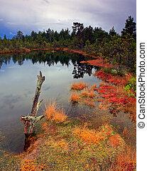 lagoa, pântano, místico