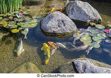 lagoa, peixes, decorativo