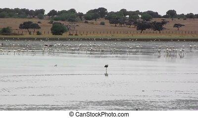 Lagoon filled of birds at dawn