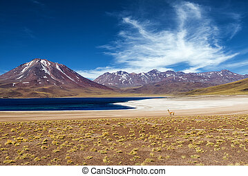 Lagoon in the Atacama Desert