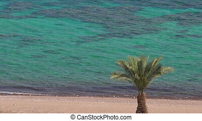 Lagoon with palm tree in Eilat, Israel