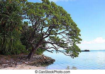 lagoon with ship wreck