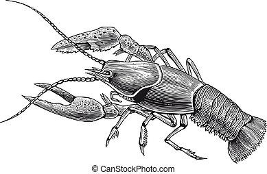 lagosta, vetorial, gravura, alto, detalhe