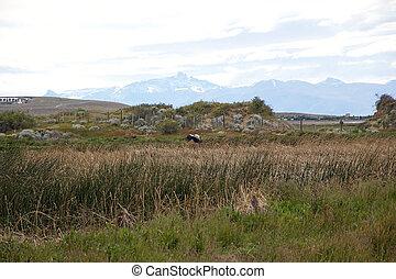 Laguna Nimez, a wildlife reserve at El Calafate in Patagonia, Argentina