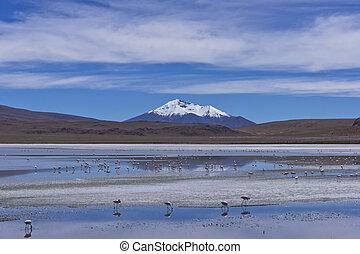 Laguna Pasto Grande, Bolivia, South America