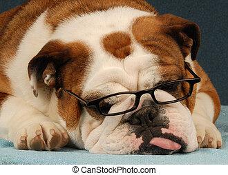 laid, chien, lunettes