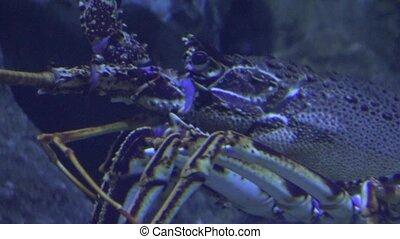 laid, crustacé, sous-marin