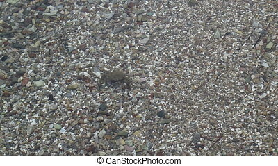 laid, fond, crabe, promenades, mer