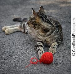 laine, gris, balle, jeune, chaton, jouer, rouges