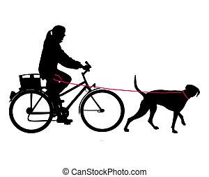 laisse, femme, vélo, chien