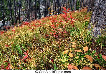 lajos, nemzeti, montana, erdő, clark