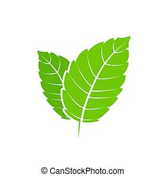 lakás, aroma., természet, egészséges, mentol, leaf., vektor...