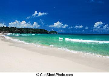 lakatlan, tropical tengerpart