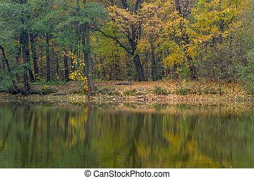 lake., αντανάκλαση , δάσοs