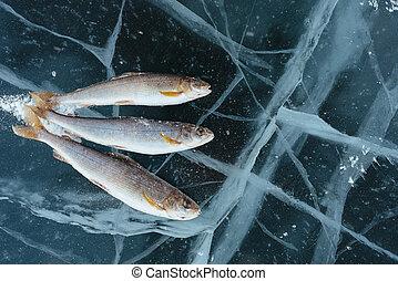 lake., 冬天, 釣魚