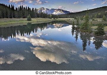 lake., 木, 海岸