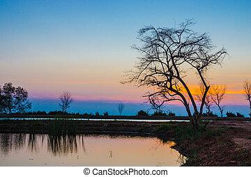 lake., 空, 木, 日没, 死んだ