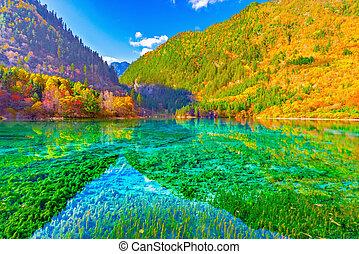 lake., 花, 5