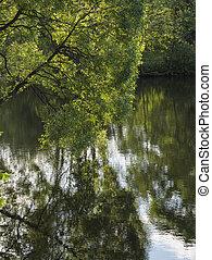 lake., albero, banca