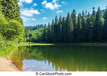 lake among spruce forest in mountains