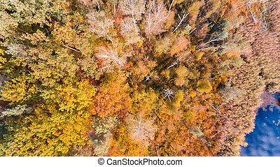 Lake and autumn forest with colorful leaves, aerial drone view