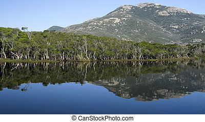 lake and eucalyptus forest in australia - lake and...