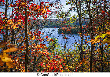 Lake and fall forest - Fall forest framing scenic autumn...