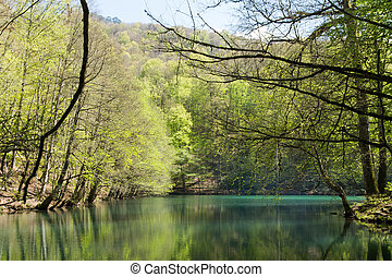 Lake and Forest in Bolu - Lake and trees in forest in Bolu.
