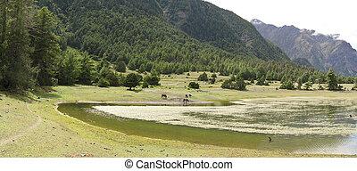 lake and meadow - a small lake along the around annapurna ...