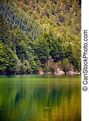 Lake and pine trees