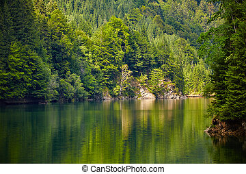 Lake and pine trees