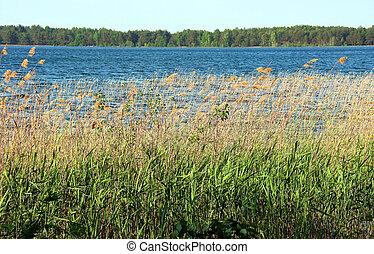 Lake and reeds