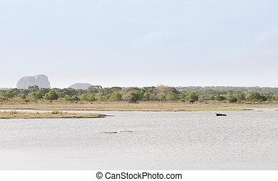 Lake and wild animals in a reserve, Sri lanka