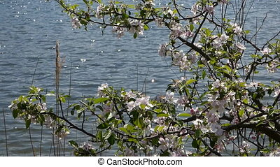 Lake and wild rose