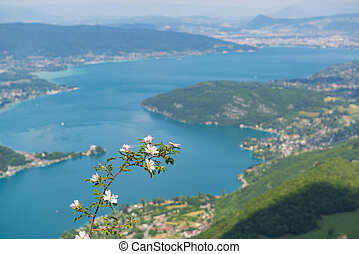 Lake Annecy from above and beautiful wild rose flower.