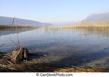 Lake annecy from saint jorioz. Mountains and reeds bed