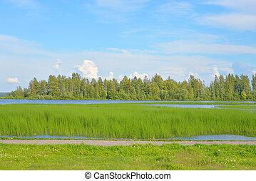 Lake at summer day.